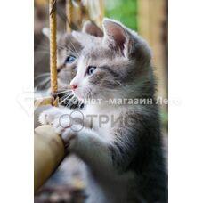 Картина - обігрівач Тріо «Кошенята»